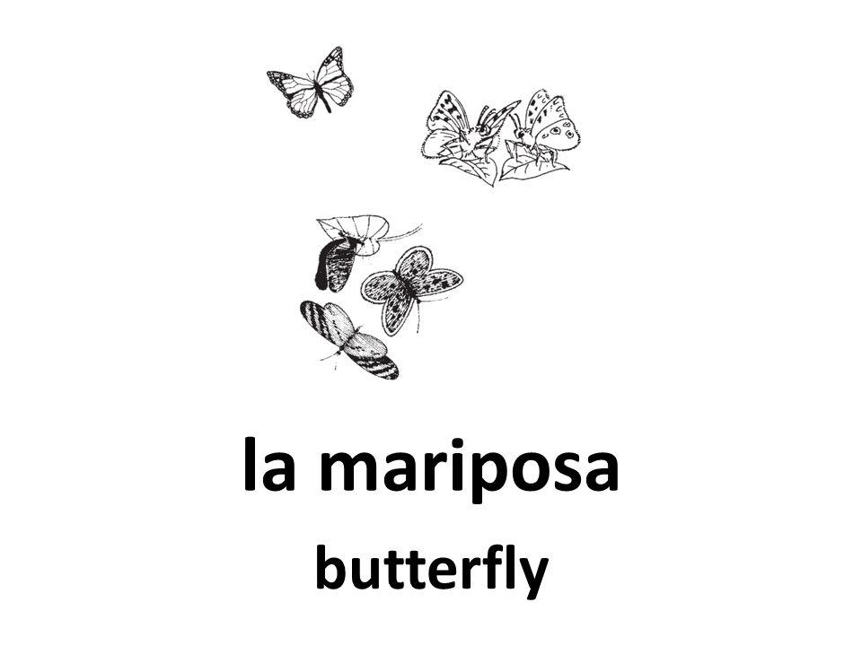 la mariposa butterfly