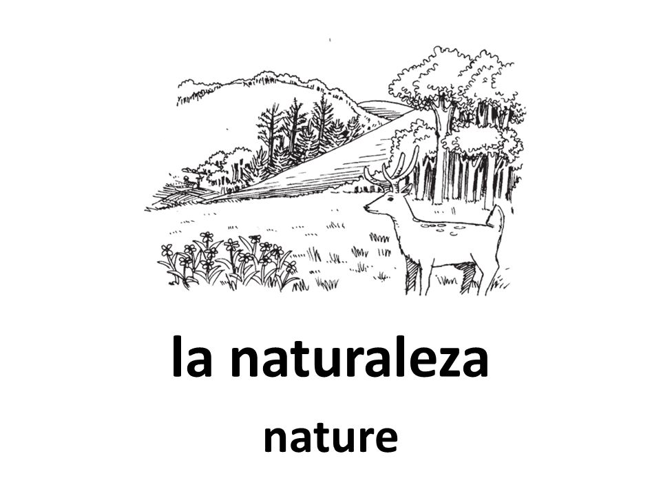 la naturaleza nature