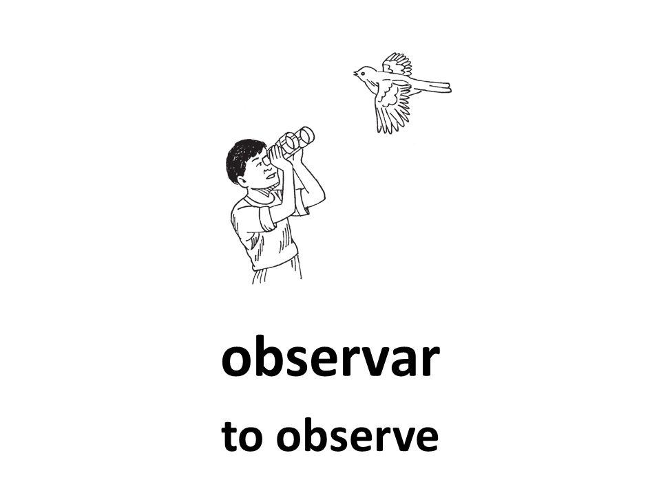 observar to observe