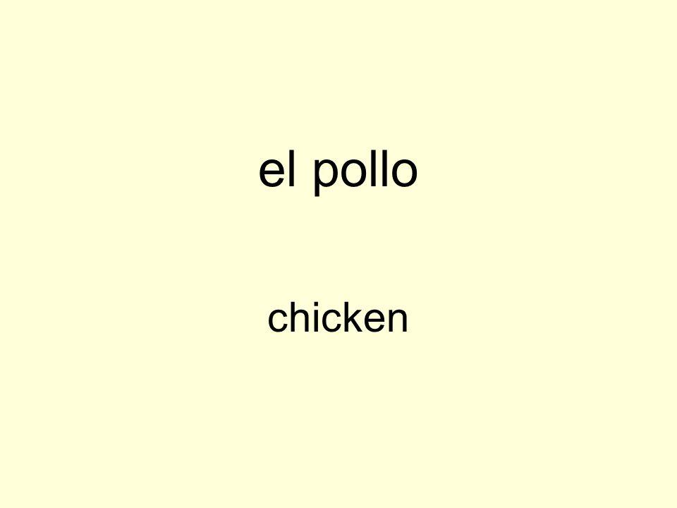 el pollo chicken