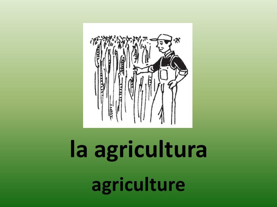 la agricultura agriculture