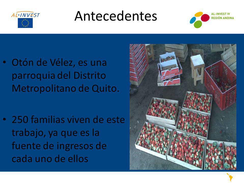 Antecedentes Otón de Vélez, es una parroquia del Distrito Metropolitano de Quito. 250 familias viven de este trabajo, ya que es la fuente de ingresos