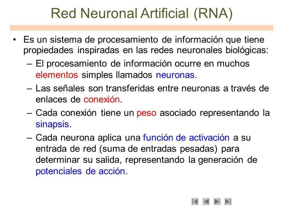 Red Neuronal Artificial (RNA) Es un sistema de procesamiento de información que tiene propiedades inspiradas en las redes neuronales biológicas: –El p