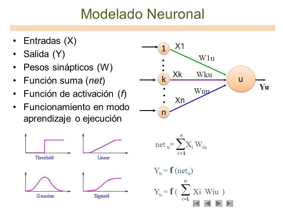 Modelado Neuronal Entradas (X) Salida (Y) Pesos sinápticos (W) Función suma (net) Función de activación (f) Funcionamiento en modo aprendizaje o ejecu