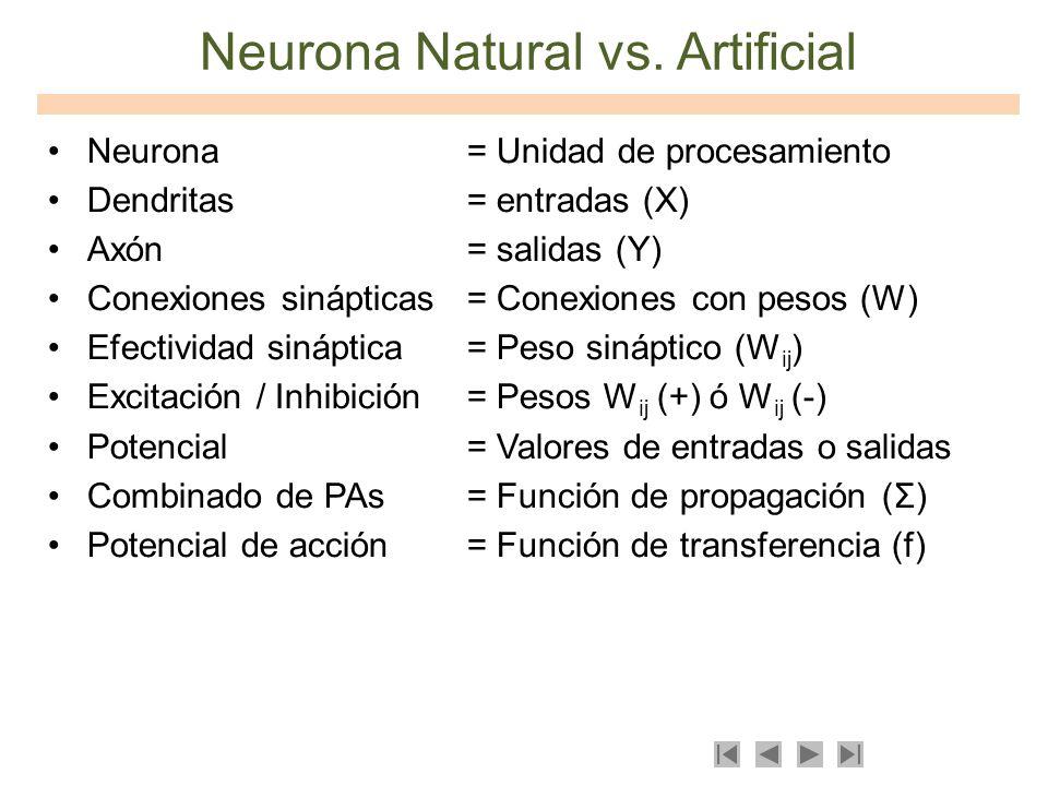 Neurona Natural vs. Artificial Neurona = Unidad de procesamiento Dendritas= entradas (X) Axón= salidas (Y) Conexiones sinápticas= Conexiones con pesos
