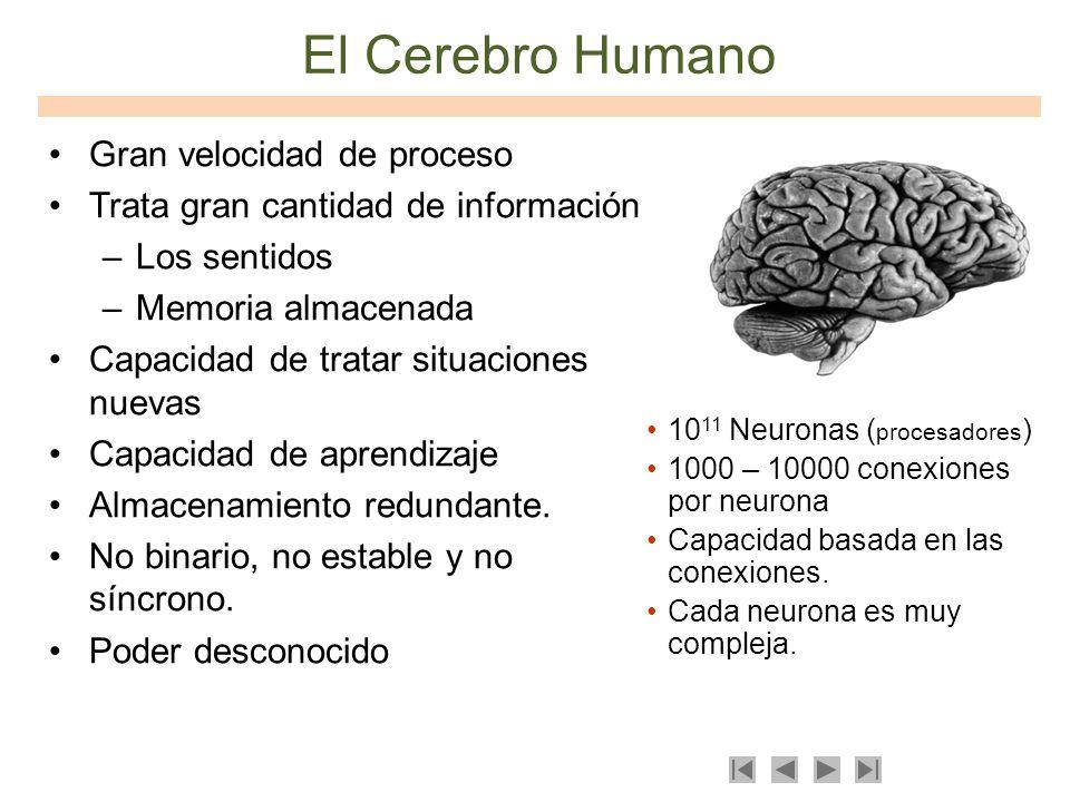 El Cerebro Humano Gran velocidad de proceso Trata gran cantidad de información –Los sentidos –Memoria almacenada Capacidad de tratar situaciones nueva