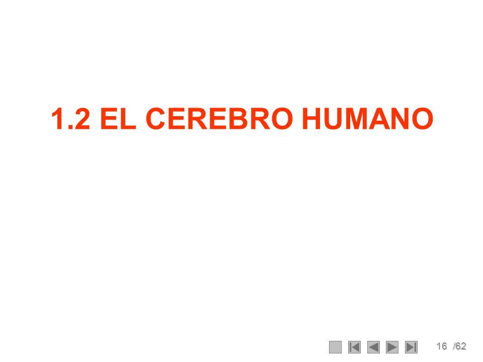 16/62 1.2 EL CEREBRO HUMANO