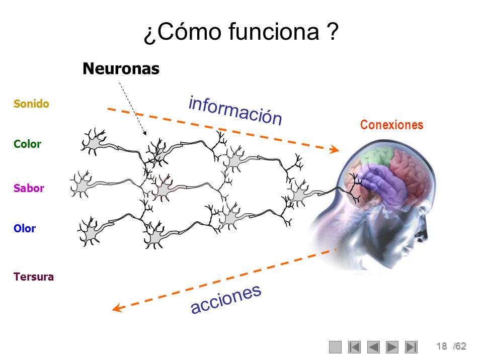 18/62 Neuronas ¿Cómo funciona ? Olor Color Sabor Sonido Tersura información acciones Conexiones