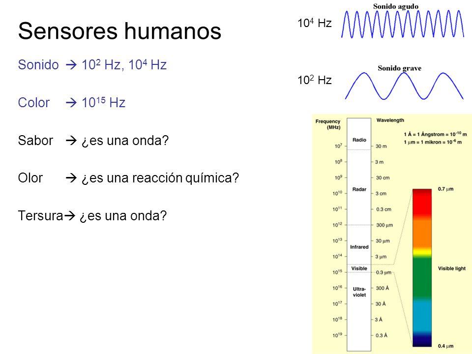 19/62 Sensores humanos Sonido 10 2 Hz, 10 4 Hz Color 10 15 Hz Sabor ¿es una onda? Olor ¿es una reacción química? Tersura ¿es una onda? 10 4 Hz 10 2 Hz