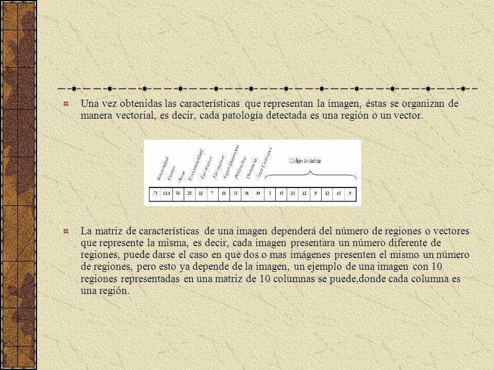 Una vez obtenidas las características que representan la imagen, éstas se organizan de manera vectorial, es decir, cada patología detectada es una reg