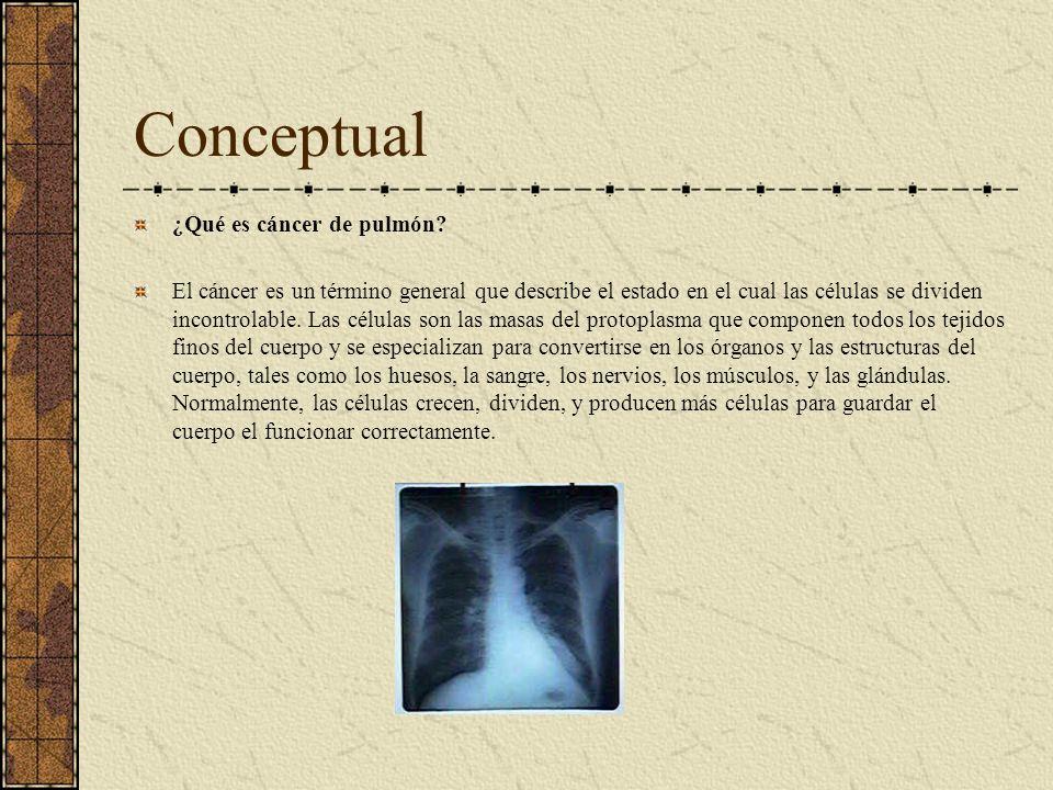 Conceptual ¿Qué es cáncer de pulmón? El cáncer es un término general que describe el estado en el cual las células se dividen incontrolable. Las célul