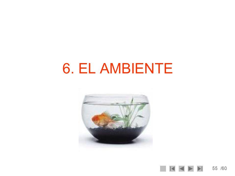 55/60 6. EL AMBIENTE