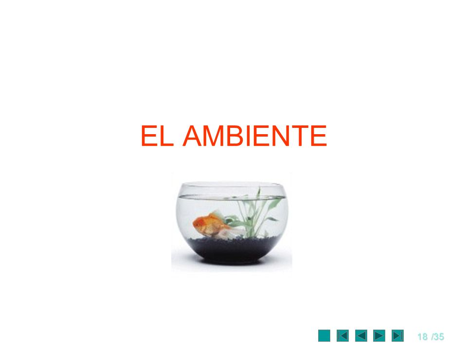 18/35 EL AMBIENTE
