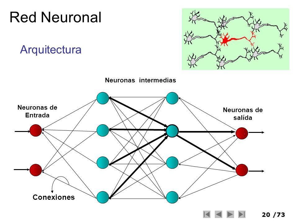 20/73 Red Neuronal Neuronas intermedias Neuronas de salída Neuronas de Entrada Conexiones Arquitectura
