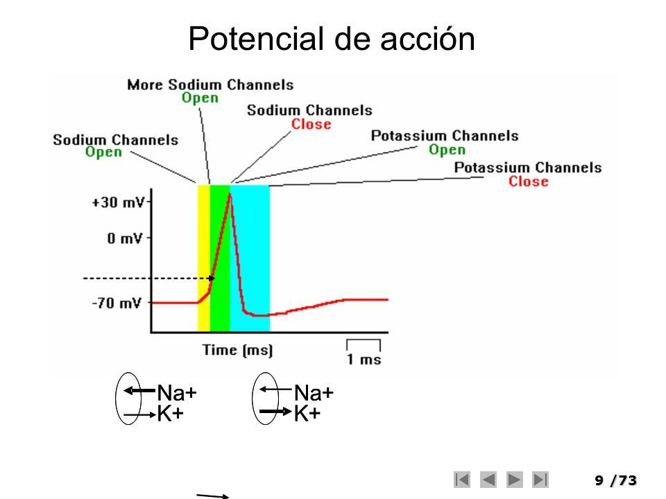 9/73 Potencial de acción Na+ K+ Na+ K+ Na+ K+ Na+ K+
