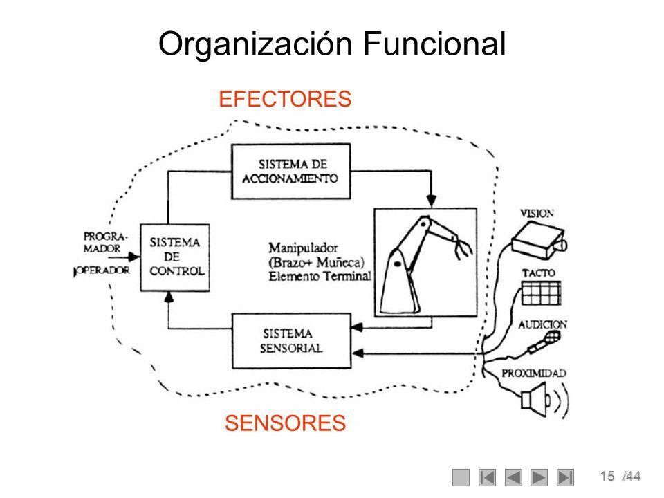 15/44 Organización Funcional SENSORES EFECTORES