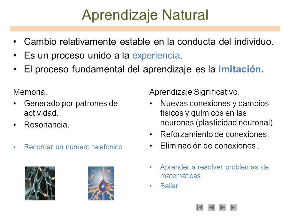 Memoria. Generado por patrones de actividad. Resonancia. Recordar un número telefónico Aprendizaje Natural Aprendizaje Significativo. Nuevas conexione