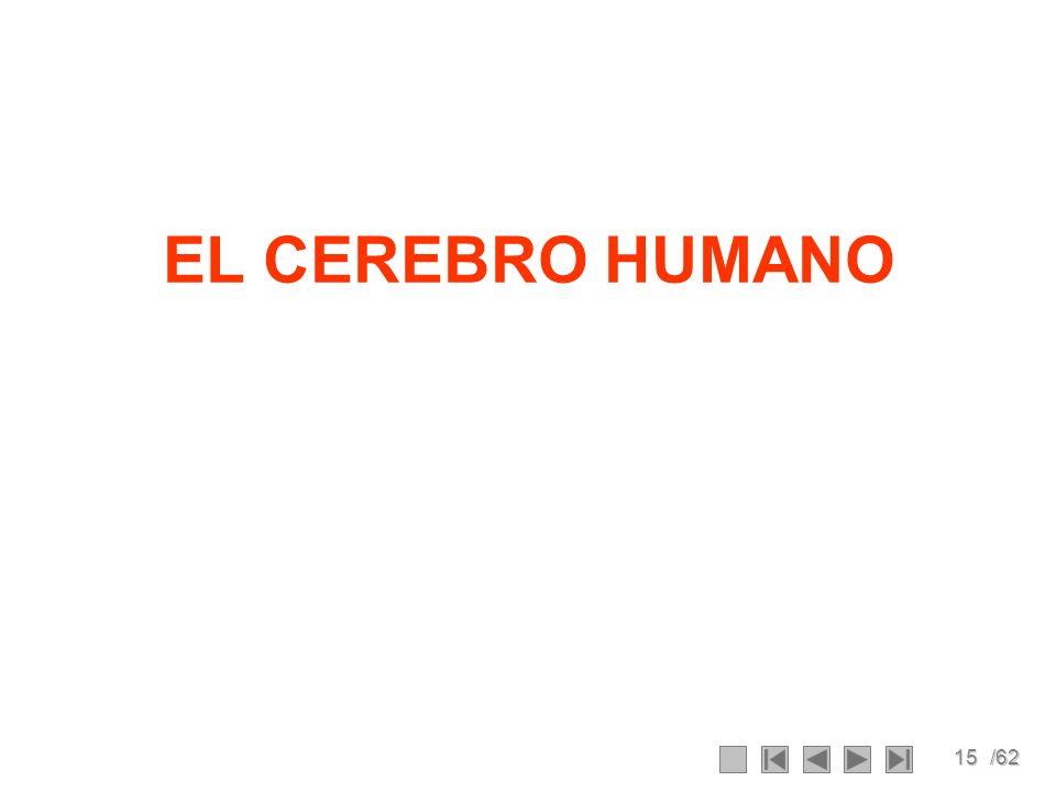 15/62 EL CEREBRO HUMANO