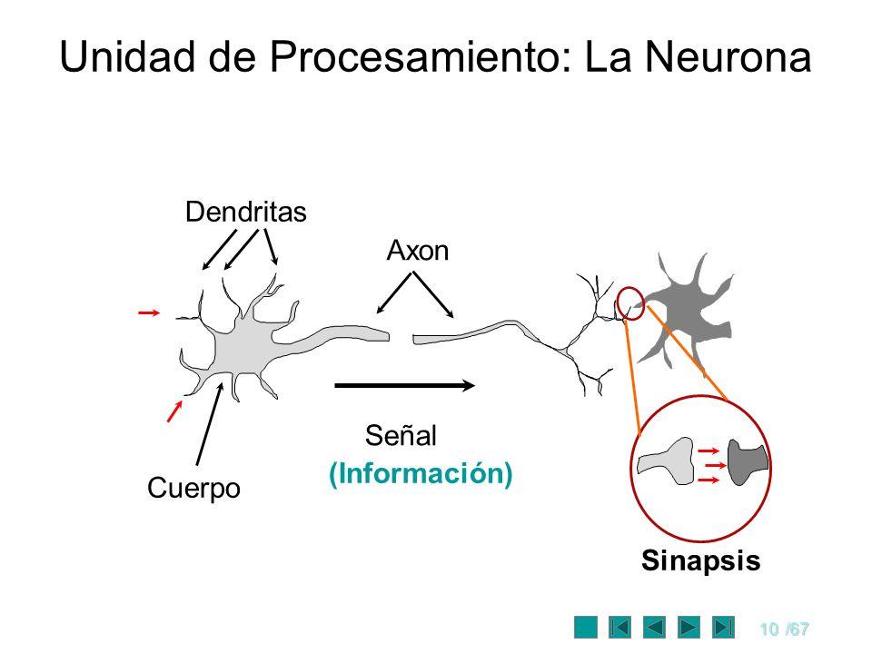 10/67 Unidad de Procesamiento: La Neurona Cuerpo Dendritas Axon Señal Sinapsis (Información)