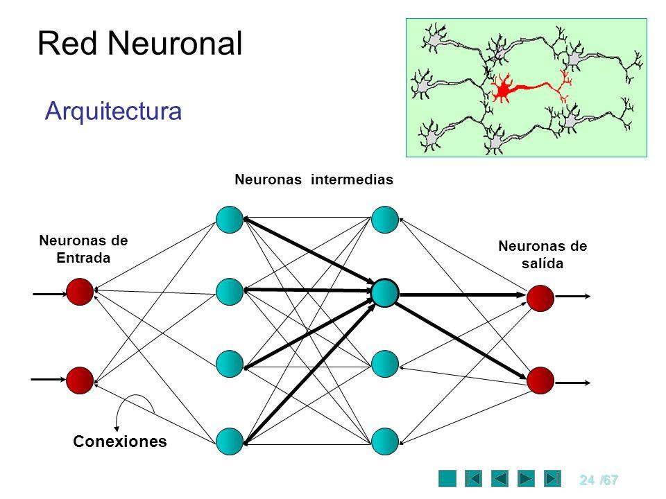 24/67 Red Neuronal Neuronas intermedias Neuronas de salída Neuronas de Entrada Conexiones Arquitectura
