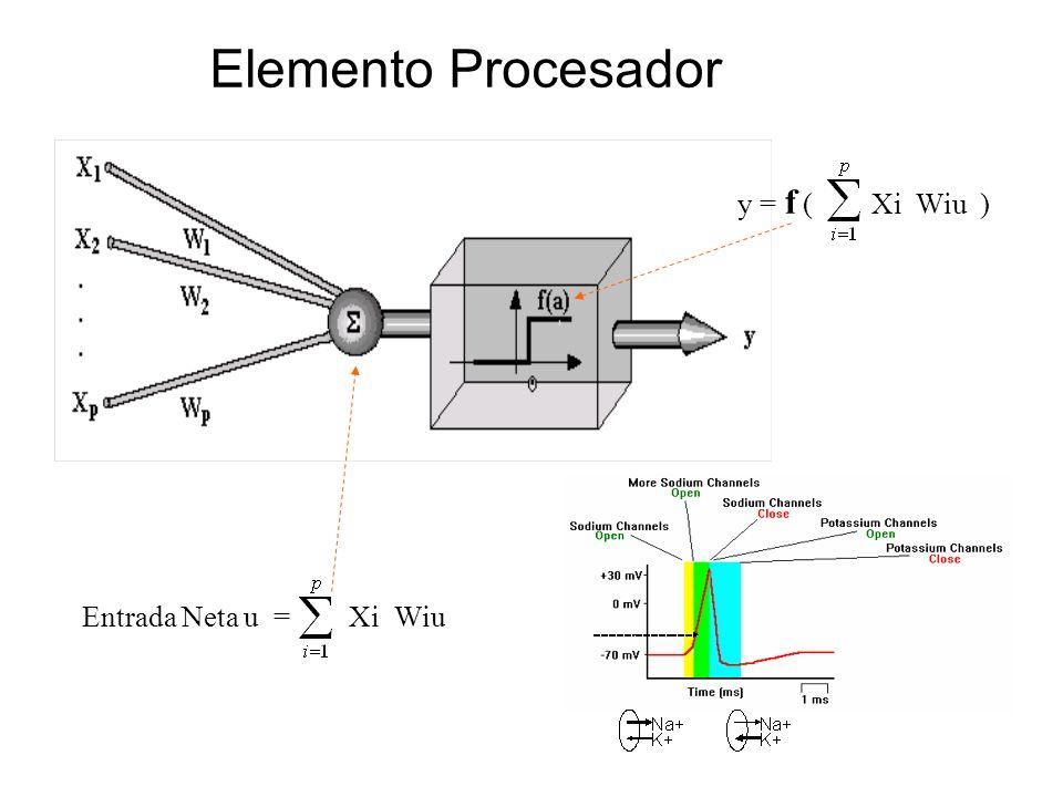 Entrada Neta u = Xi Wiu y = f ( Xi Wiu ) Elemento Procesador