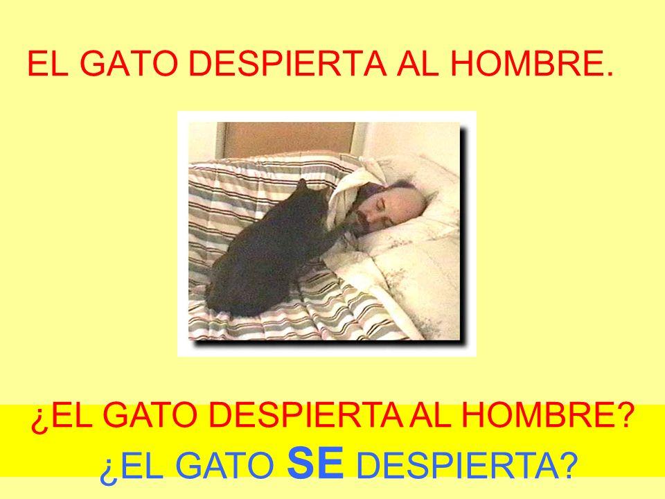EL GATO DESPIERTA AL HOMBRE. ¿EL GATO DESPIERTA AL HOMBRE ¿EL GATO SE DESPIERTA