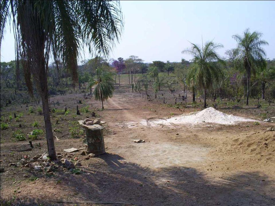Limpieza del terreno