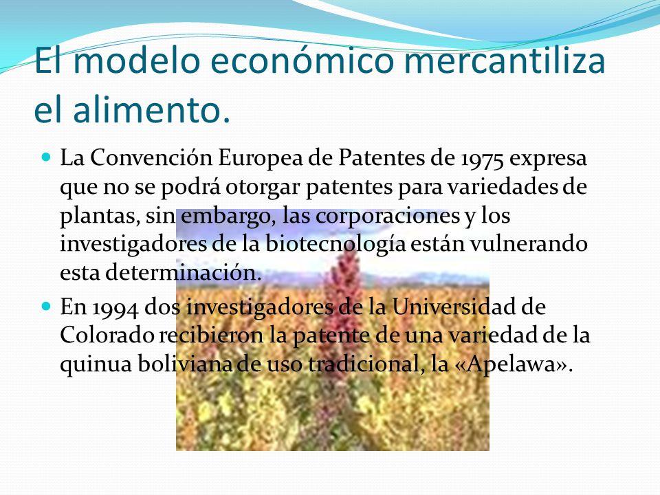 El modelo económico mercantiliza el alimento. La Convención Europea de Patentes de 1975 expresa que no se podrá otorgar patentes para variedades de pl
