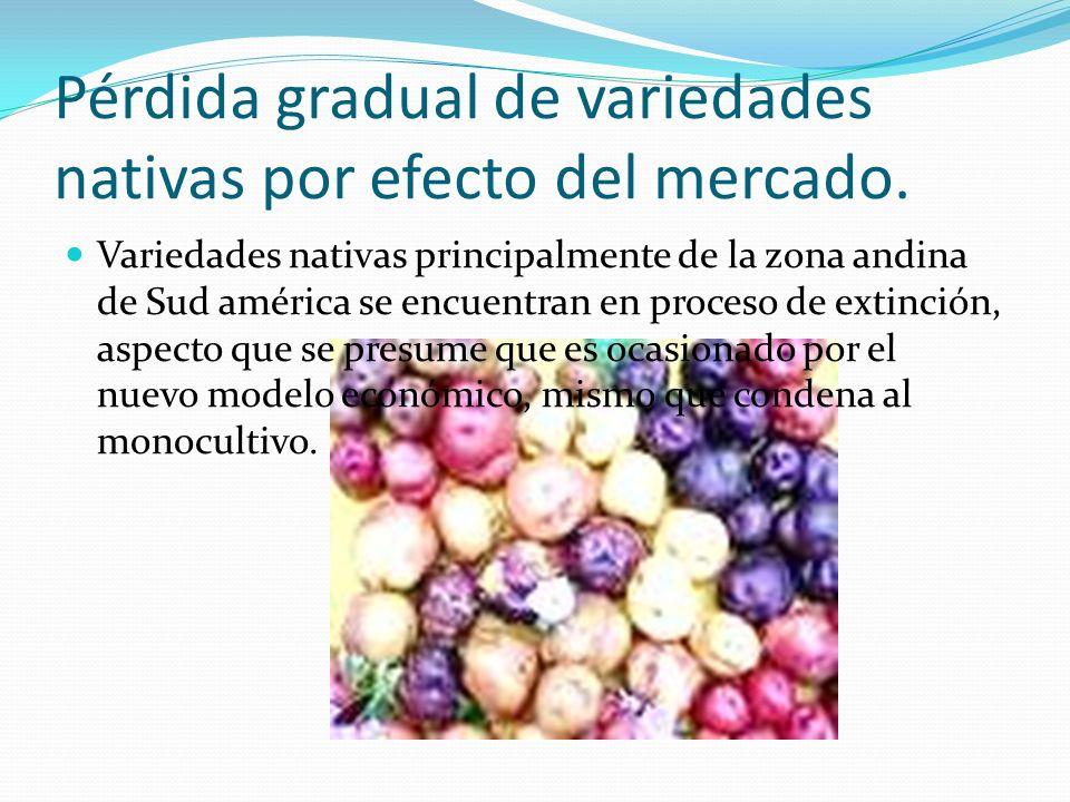 Pérdida gradual de variedades nativas por efecto del mercado. Variedades nativas principalmente de la zona andina de Sud américa se encuentran en proc