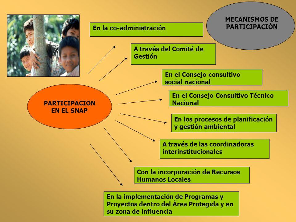 MECANISMOS DE PARTICIPACIÓN PARTICIPACION EN EL SNAP En la co-administración En los procesos de planificación y gestión ambiental A través del Comité
