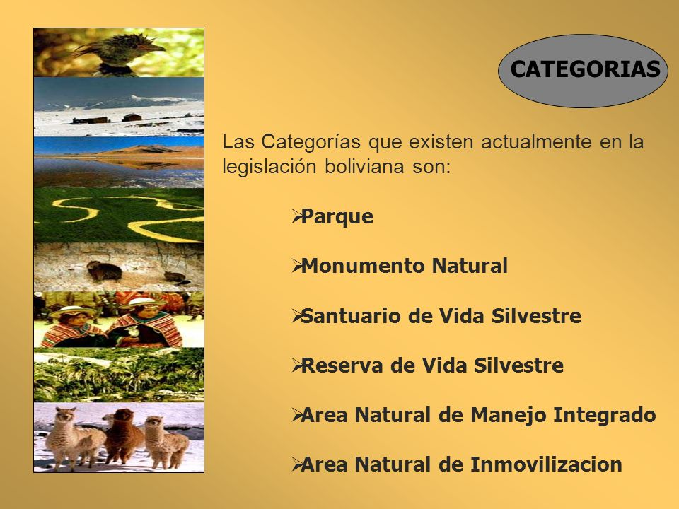 Las Categorías que existen actualmente en la legislación boliviana son: Parque Monumento Natural Santuario de Vida Silvestre Reserva de Vida Silvestre