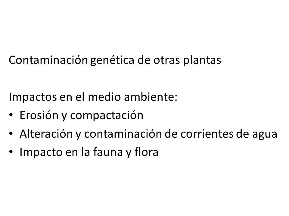 Contaminación genética de otras plantas Impactos en el medio ambiente: Erosión y compactación Alteración y contaminación de corrientes de agua Impacto