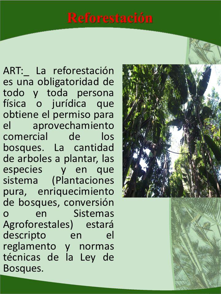 Reforestación ART:_ La reforestación es una obligatoridad de todo y toda persona física o jurídica que obtiene el permiso para el aprovechamiento come