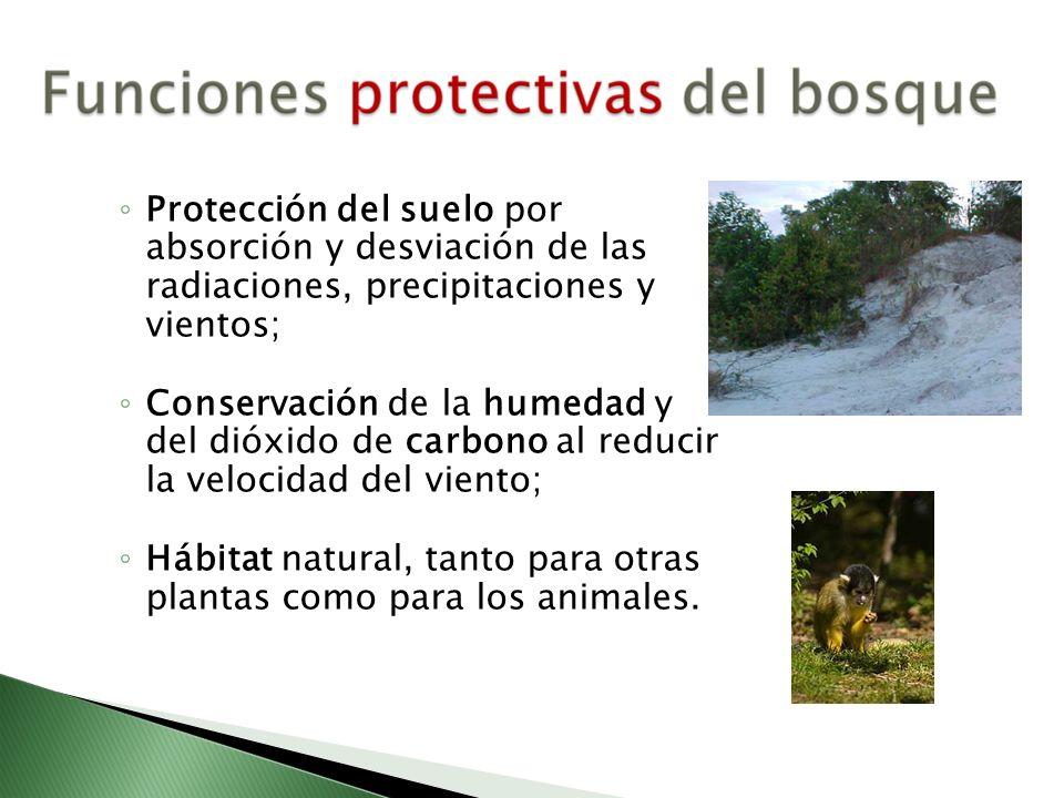Protección del suelo por absorción y desviación de las radiaciones, precipitaciones y vientos; Conservación de la humedad y del dióxido de carbono al