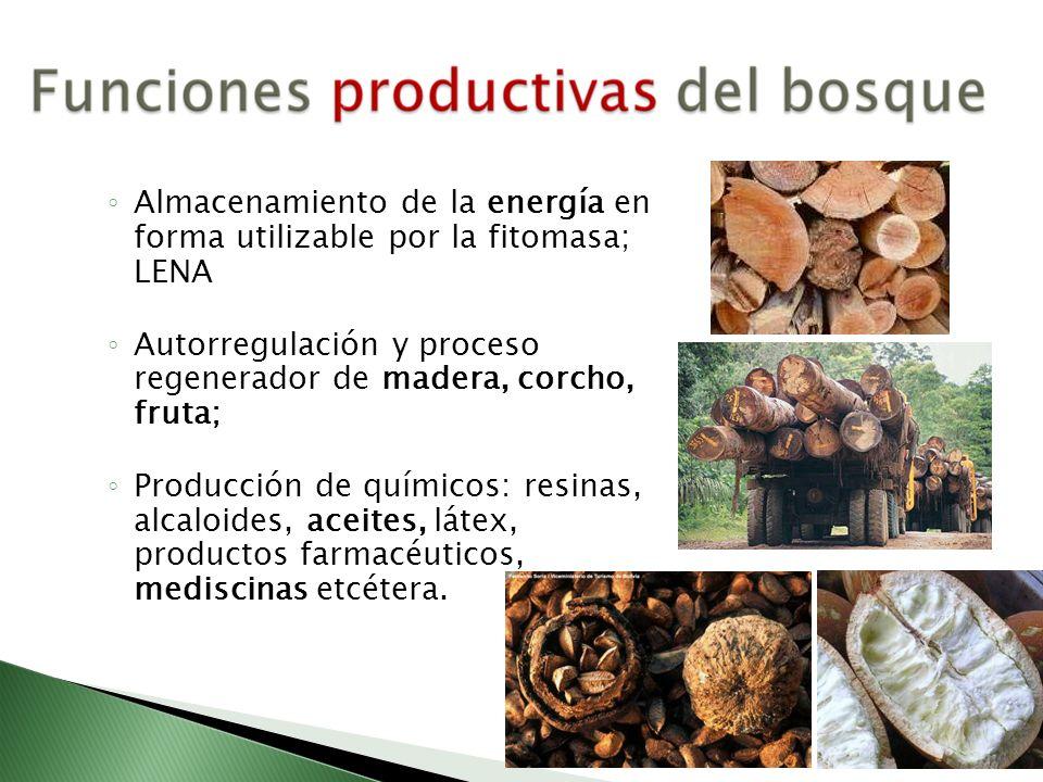 Almacenamiento de la energía en forma utilizable por la fitomasa; LENA Autorregulación y proceso regenerador de madera, corcho, fruta; Producción de q