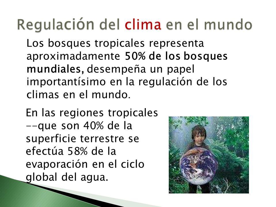 Los bosques tropicales representa aproximadamente 50% de los bosques mundiales, desempeña un papel importantísimo en la regulación de los climas en el