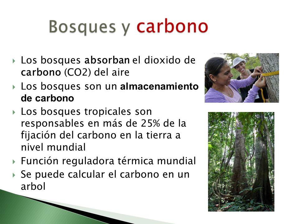 Los bosques absorban el dioxido de carbono (CO2) del aire Los bosques son un almacenamiento de carbono Los bosques tropicales son responsables en más