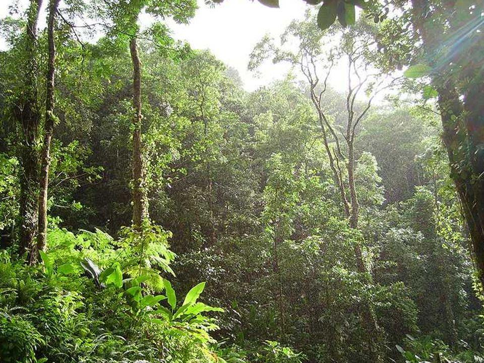 Propuesta sobre Reducción de Emisiones debidas a la Deforestación y Degradación de los Bosques (REDD) Frenar la deforestación tiene dos consecuencias: Es una forma barata de reducir las emisiones del dioxido de carbono (CO2) Los dueños de los bosques pueden obtener ingresos financieros a través de créditos en los mercados globales de carbono.