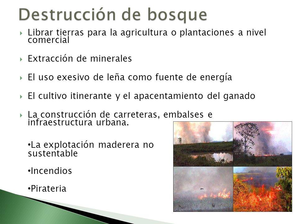 Librar tierras para la agricultura o plantaciones a nivel comercial Extracción de minerales El uso exesivo de leña como fuente de energía El cultivo i