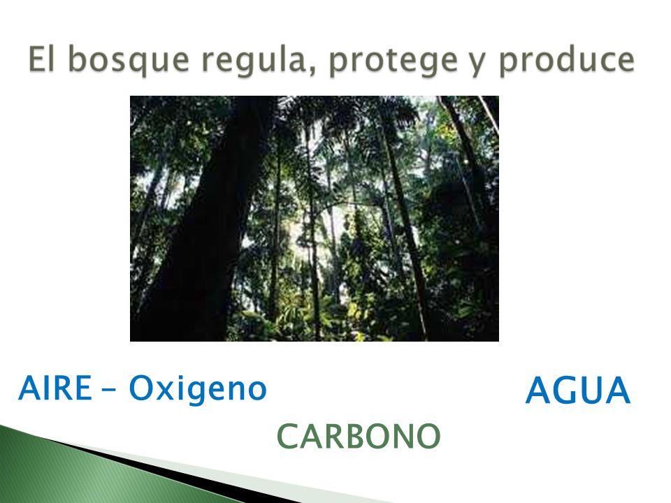AGUA AIRE – Oxigeno CARBONO