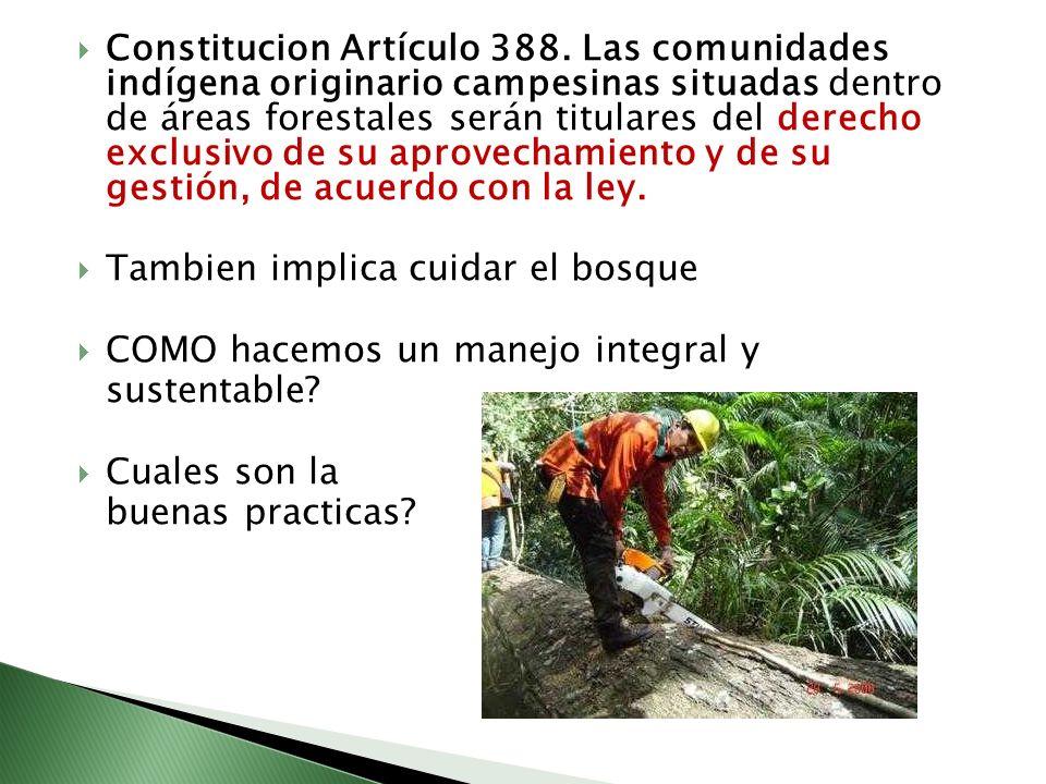 Constitucion Artículo 388. Las comunidades indígena originario campesinas situadas dentro de áreas forestales serán titulares del derecho exclusivo de