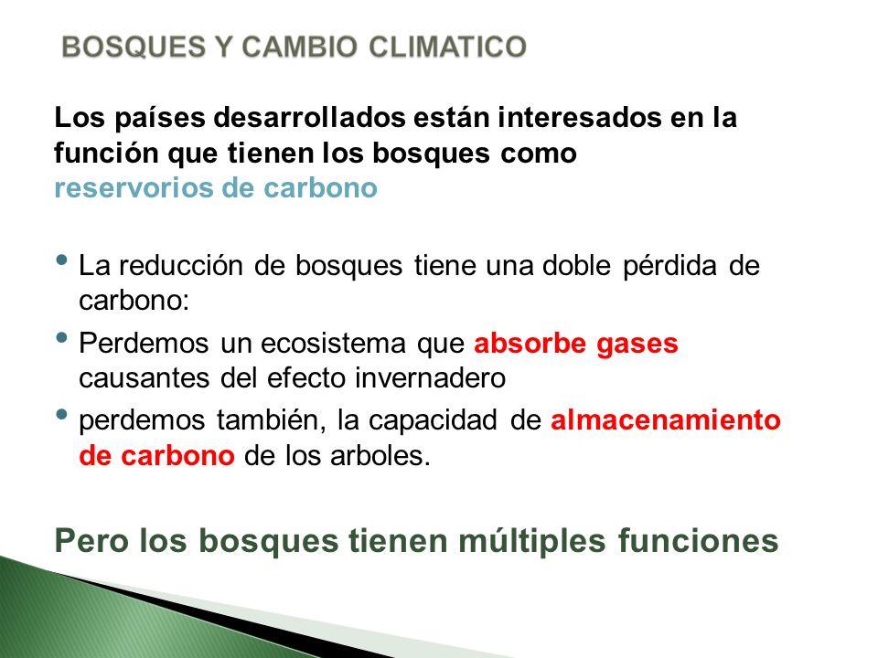 Los países desarrollados están interesados en la función que tienen los bosques como reservorios de carbono La reducción de bosques tiene una doble pé