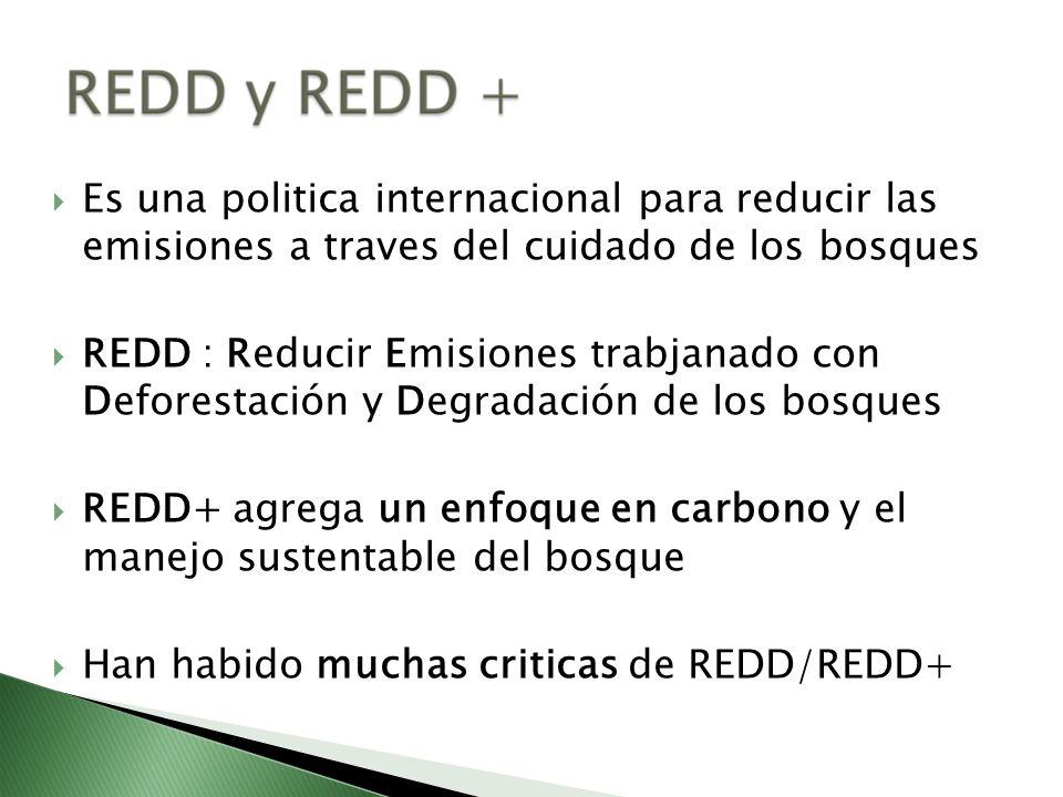 Es una politica internacional para reducir las emisiones a traves del cuidado de los bosques REDD : Reducir Emisiones trabjanado con Deforestación y D