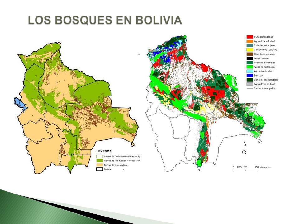 Los países desarrollados están interesados en la función que tienen los bosques como reservorios de carbono La reducción de bosques tiene una doble pérdida de carbono: Perdemos un ecosistema que absorbe gases causantes del efecto invernadero perdemos también, la capacidad de almacenamiento de carbono de los arboles.