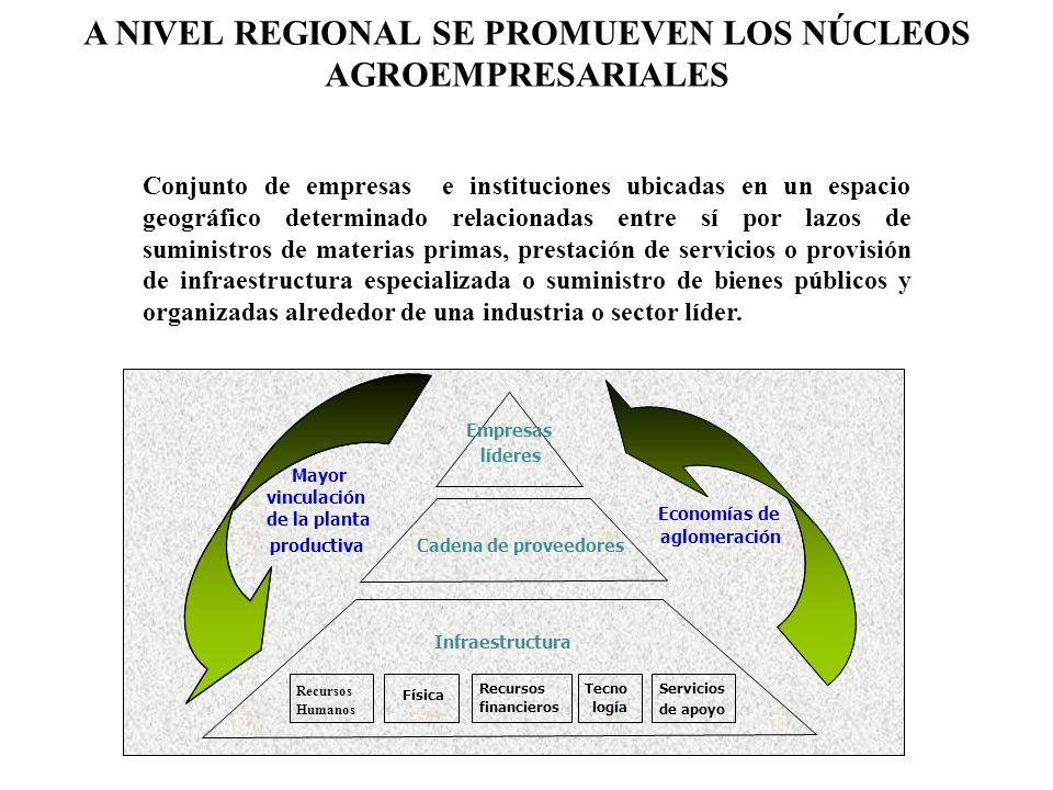 A NIVEL REGIONAL SE PROMUEVEN LOS NÚCLEOS AGROEMPRESARIALES Conjunto de empresas e instituciones ubicadas en un espacio geográfico determinado relacio