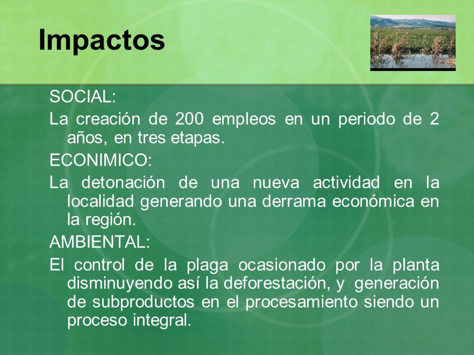 Impactos SOCIAL: La creación de 200 empleos en un periodo de 2 años, en tres etapas. ECONIMICO: La detonación de una nueva actividad en la localidad g