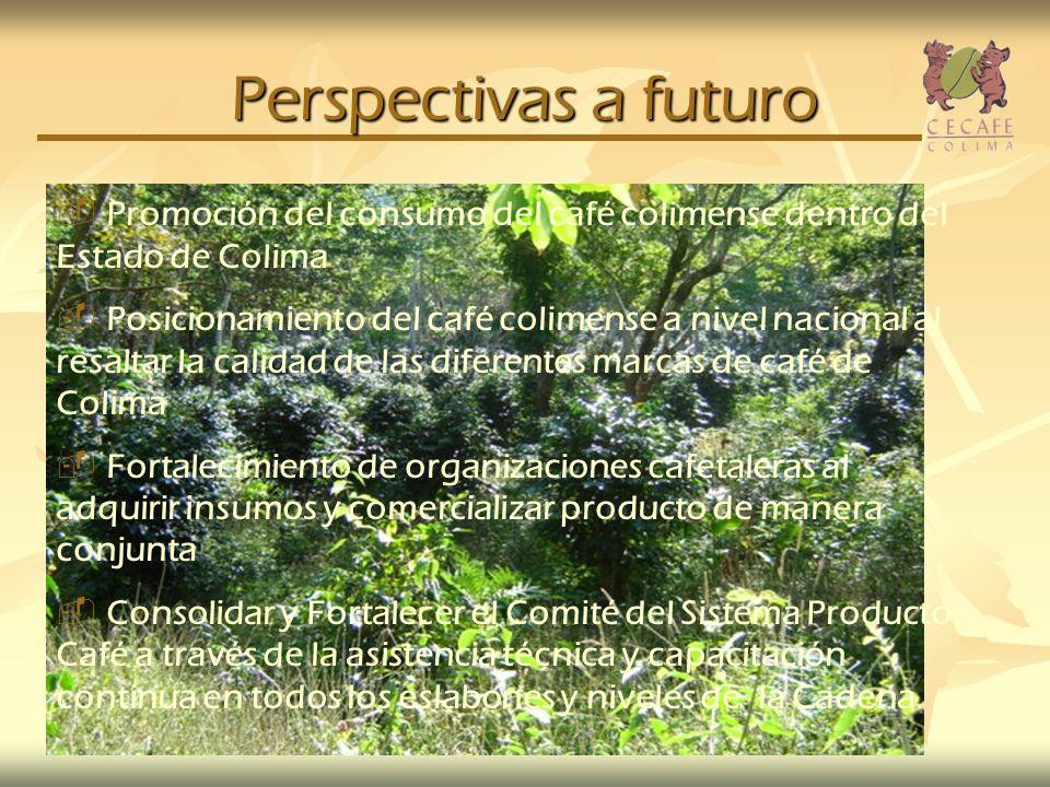 Perspectivas a futuro Promoción del consumo del café colimense dentro del Estado de Colima Posicionamiento del café colimense a nivel nacional al resa