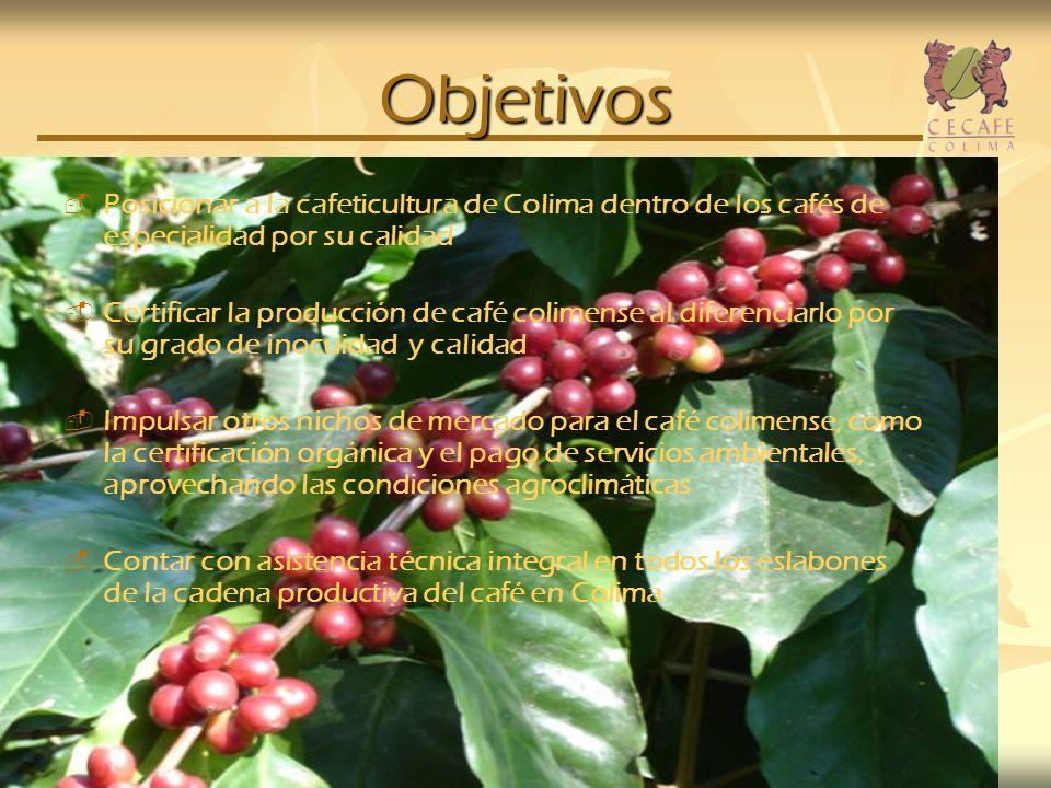 Objetivos Posicionar a la cafeticultura de Colima dentro de los cafés de especialidad por su calidad Certificar la producción de café colimense al dif