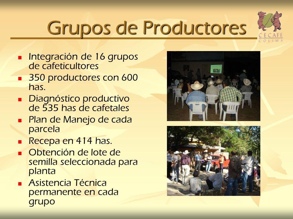 Grupos de Productores Integración de 16 grupos de cafeticultores 350 productores con 600 has. Diagnóstico productivo de 535 has de cafetales Plan de M