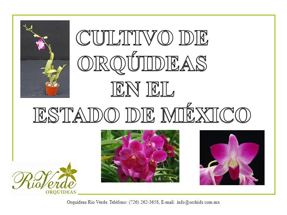 Orquídeas Río Verde. Teléfono: (726) 262-3658, E-mail: info@orchids.com.mx